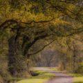 Drenthe, de eiken provincie.