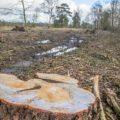 Gr. Startbaan Havelte bijzonder: weg bomen en biodiversiteit t.b.v. heischraalgrasland! WIE BEGRIJPT DIT?
